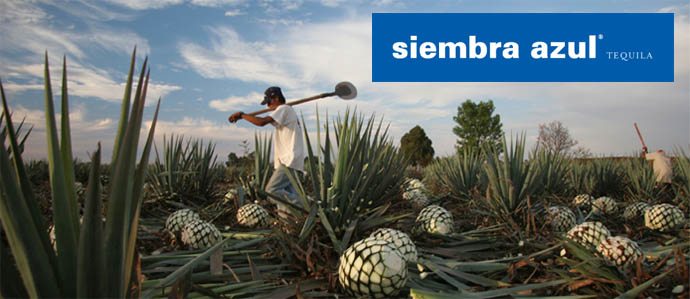 Siembra Azul Introduces Two New Extra Anejo Tequilas