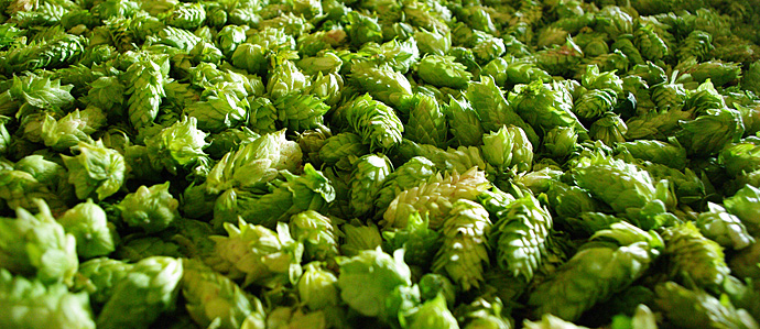 Are Hops Shortages Really Something Craft Beer Drinkers Need to Worry About?